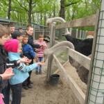 На страусиной ферме 1