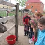 На страусиной ферме 3