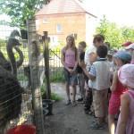 01 Страусова ферма та Музей меду