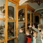 10 У музеї природи